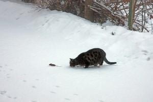KvdS kat en muis 004