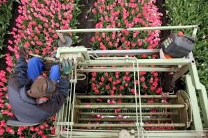 KvdS tulpen koppen 036