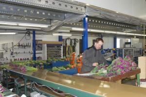 KvdS tulpen oogsten  1