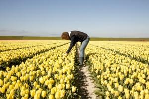 anita noordam ziek zoeken tulpen 1